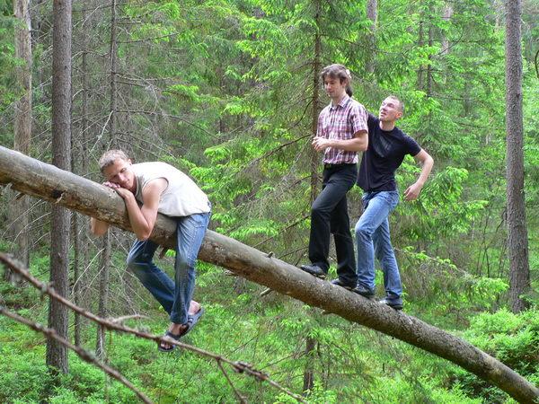 Мы завалили дерево